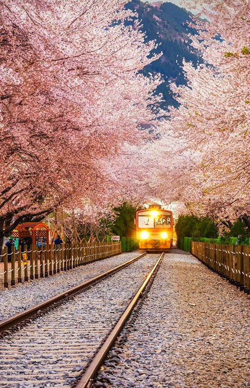 Stop This Train- Late 20's
